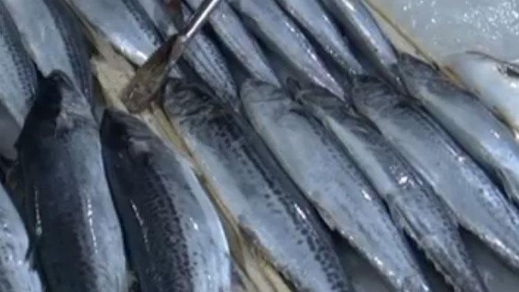 开海第二天 济南海鲜市场迎来头茬海鲜