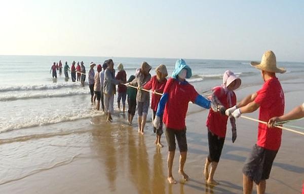 91秒 吃新鲜自己动手!青岛灵山湾200渔民游客下海拉网捕鱼