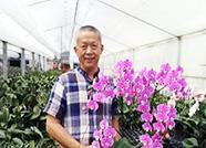 """喜讯!禹城蝴蝶兰新品种""""赛冰冰""""获第九届""""花博会""""金奖"""