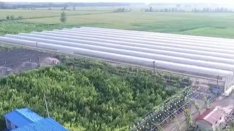 山东省农科院科技开放周启动 推广100余项新技术新品种