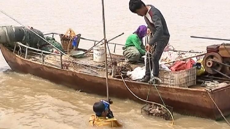 32秒丨吃货福音!滨州发现黄渤海最大近江牡蛎资源分布区