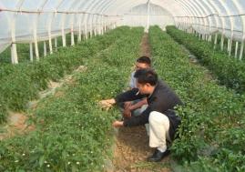 济宁任城区5项目入选省西部经济隆起带基层科技人才支持计划