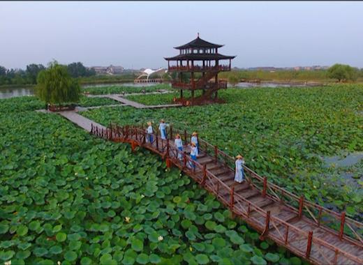 81秒|赏荷花听雁鸣!航拍枣庄双龙湖湿地人与自然和谐画卷