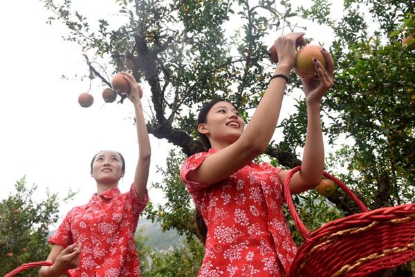 果树里作出大文章 枣庄峄城石榴产业年产值近10亿元