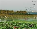国庆中秋假期次日 济宁微山湖旅游区接待游客11.5万人次