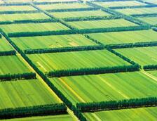 """【""""砥砺奋进的五年""""成就展】4年打造千万亩绿林 山东启动国土绿化6大工程"""