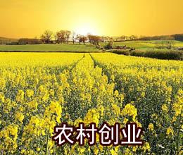 """潍坊市创新推出农村""""创业套餐""""支持返乡下乡创业"""
