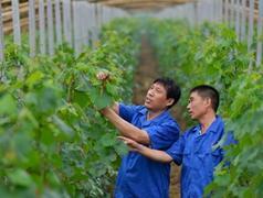 青岛出新规鼓励返乡人员创业 符条件一次性补贴1万元
