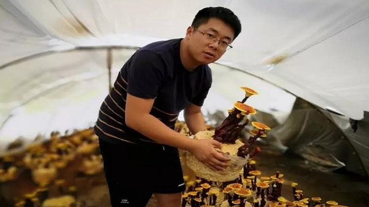 青岛90后小伙自主创业把灵芝种成盆景,不入药照样遭抢购