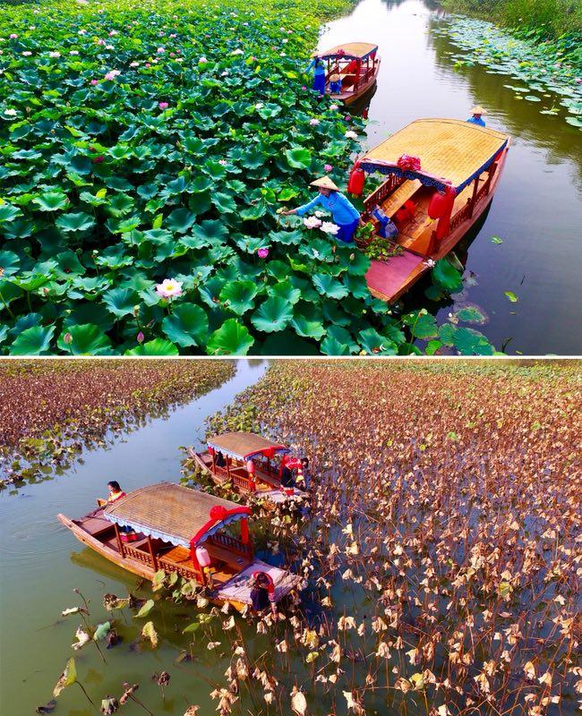 美爆了!台儿庄运河国家湿地公园从春美到冬