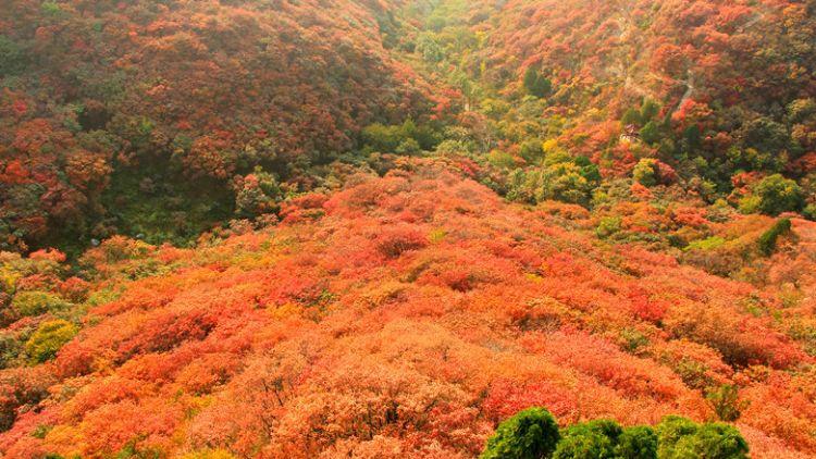 4分钟丨临朐石门坊的叶子红了,这个周末你还不来看看?
