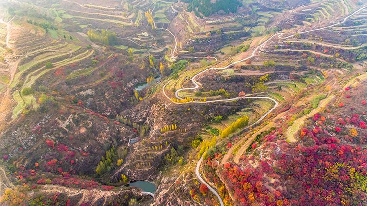 29秒|看过沂蒙山区的深秋红叶 胜过北京香山看人头!