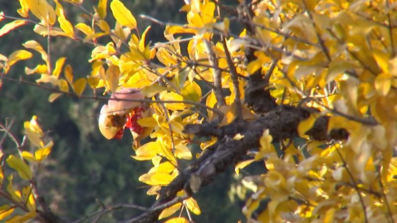 44秒|枣庄冠世榴园秋意浓!看漫山红遍,层林尽染