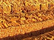"""前三季度济南产业转型升级成效显著 粮食""""十五连丰"""""""