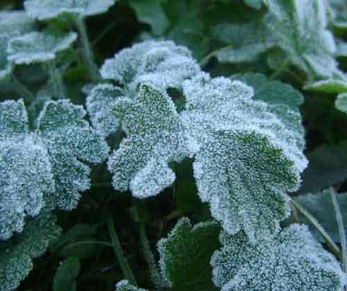 海丽气象吧丨降温6~8℃!枣庄周末将出现霜冻