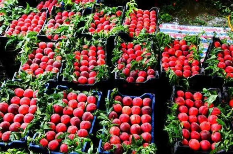 枣庄获评第一批国家农业可持续发展试验示范区