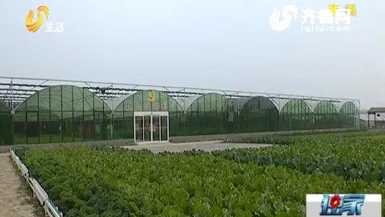 64秒丨户均年收入超10万!昌乐庵上湖村的秘诀是反季果菜