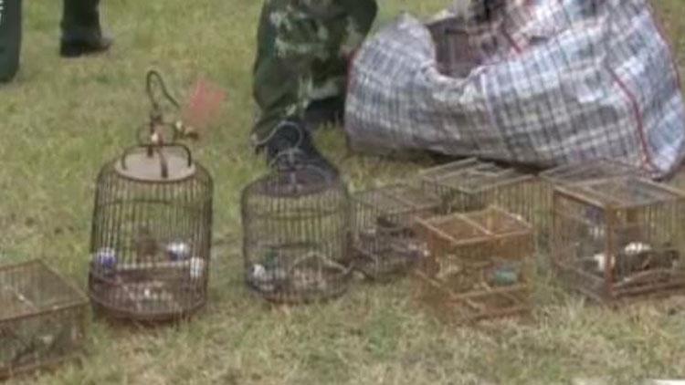 71秒丨百余只野生鸟类被塞后备箱 烟台三人非法狩猎被刑拘