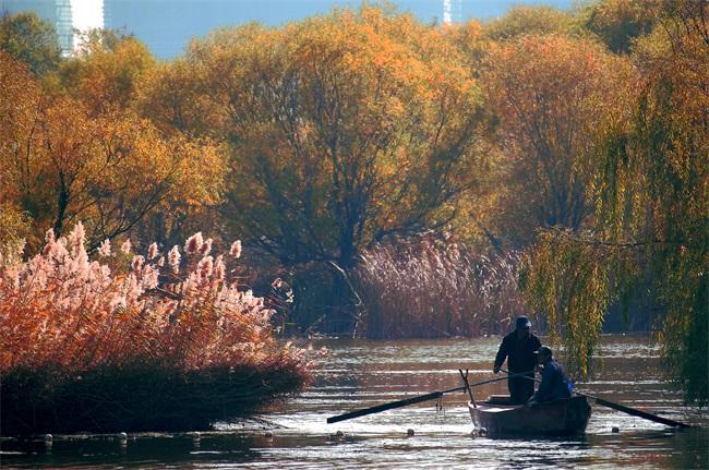 组图:安丘大汶河国家城市湿地公园秋日美如画