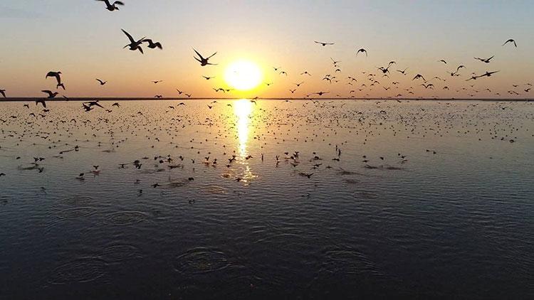 最美山东|黄河三角洲迎来近万丹顶鹤、大天鹅等候鸟