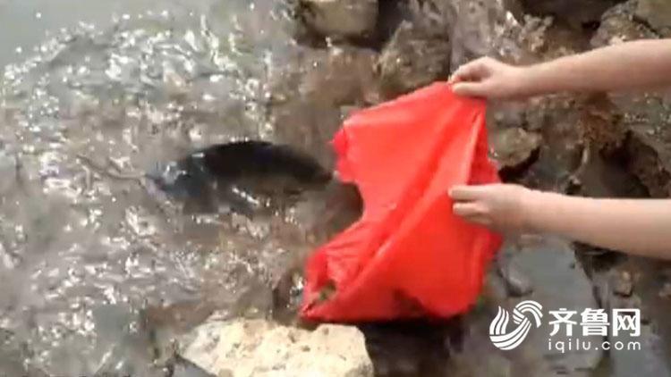 济南卧虎山水库:市民、游客偷着放生 致鱼类死亡