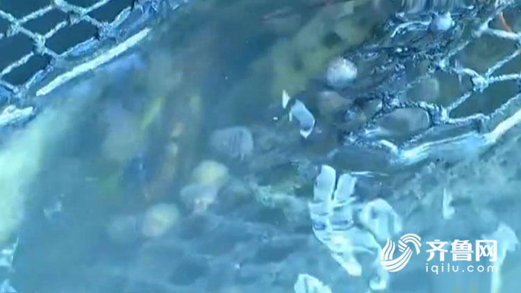 杭州西湖:游客放生福寿螺 破坏生态平衡