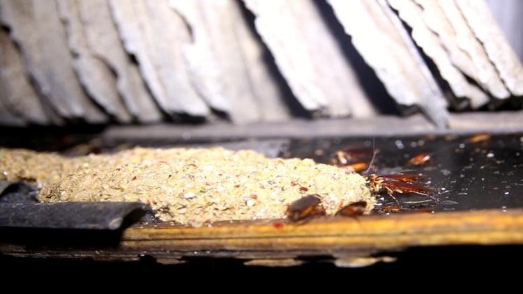 138秒|不挑食不忌口吃起来还绅士!章丘这家企业养蟑螂消灭餐厨垃圾