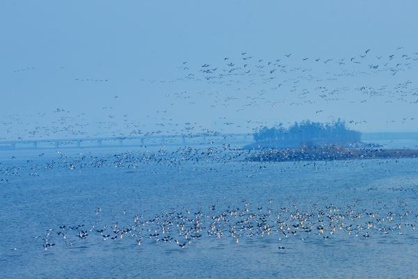 威海南海新区坚持三生共融理念 打造鸟儿天堂