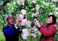 """每年投入400万元 潍坊水果种植达""""百万亩""""级别"""