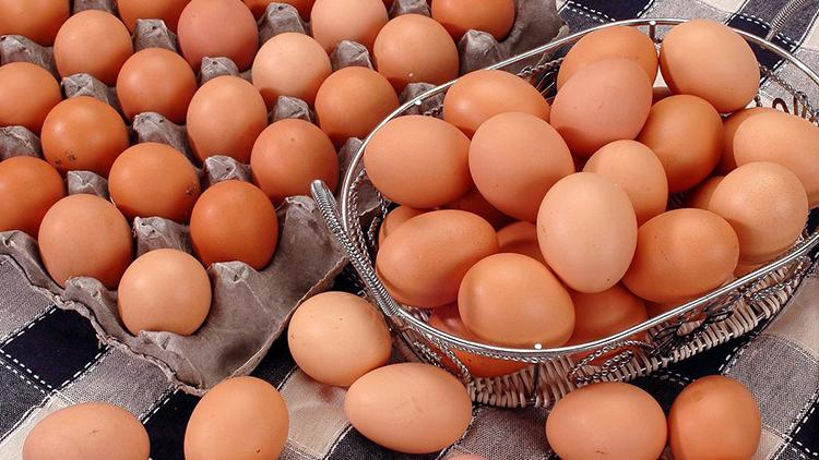"""德州有个""""VIP产蛋房"""",每年提供优质鲜蛋6.5亿枚"""
