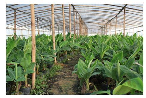 到2020年,山东力争农业生产服务业主体达到22万家