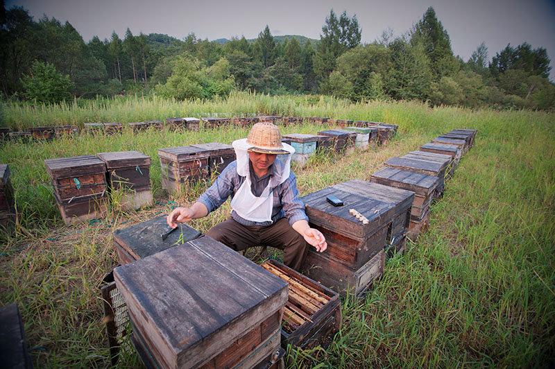 看父亲养蜂赚钱 临沂小伙欲发大财竟偷他人10箱蜜蜂