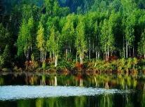 """向前一步解决问题 日照岚山七年""""垃圾山""""摇身变成黑松林"""