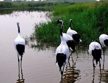 山东建湿地保护负面清单 禁止擅自征收、占用重要湿地