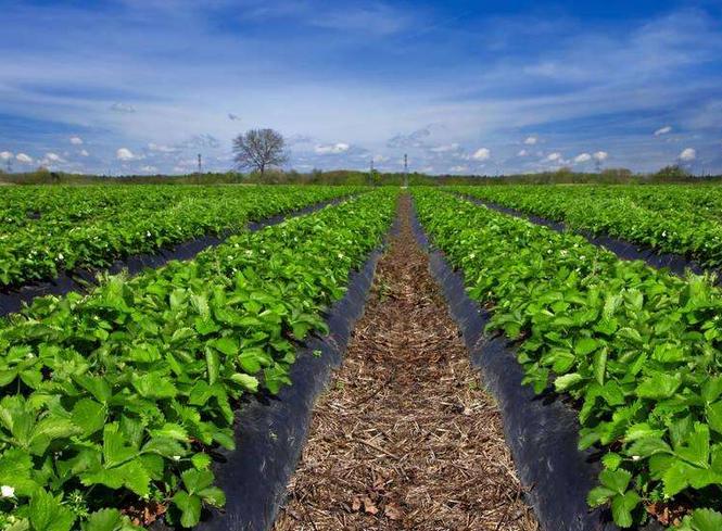 """山东发展农业""""新六产"""" 2020年要达成这些目标"""