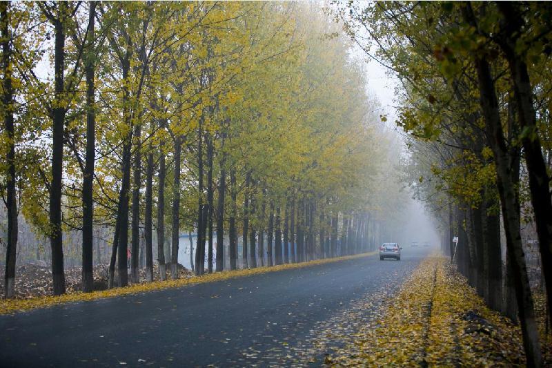 美不胜收!济宁评选10条美丽农村路 沿途风光堪比风景画