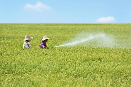 """山东多措并举加强农药管理 保障""""粮食安全"""""""