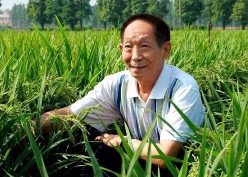 第二届国际海水稻论坛青岛举行 袁隆平担任大会主席