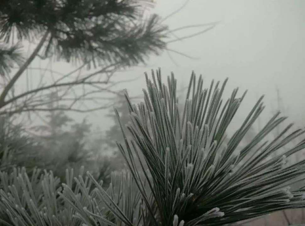 白雪潜入夜!青岛迎今冬首场降雪 现雾凇美景