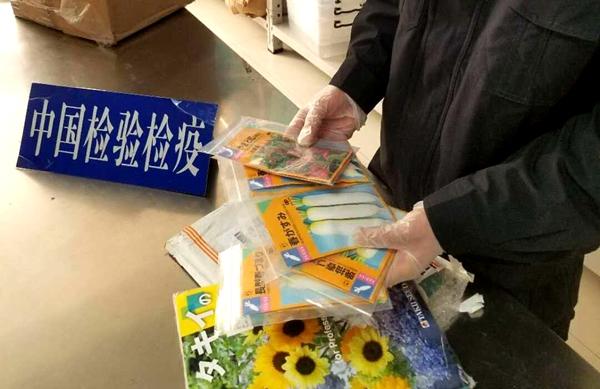 书籍藏植物种子企图蒙混过关!济南邮件口岸关检当场查获