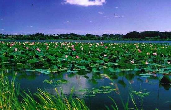 山东:立案查处河湖违法案件百余起 维护河湖健康生命