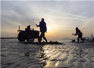 组图:烟台严冬里的赶海人 绘就冬日海滩别样风景
