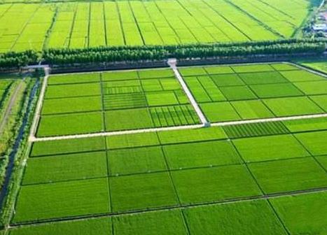 """山东将在2019年底划定农田""""两区"""" 5600万亩划在哪看这里"""