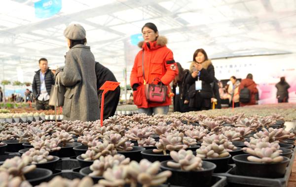 全国网络媒体山东行丨网上直播卖花卉,每卖10株多肉6株来自青州