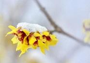 海丽气象吧 | 初雪将至!14日上午济南大部地区阴有小阵雪