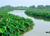 山东:南四湖片治理工程提前完成中央水利年度投资计划