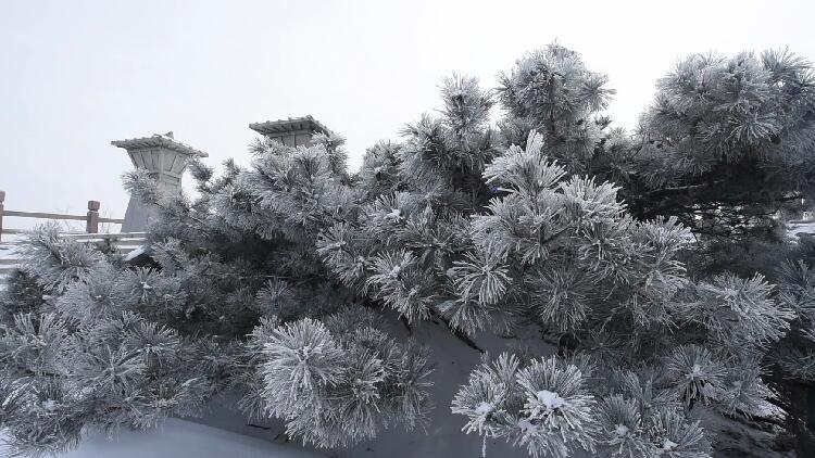 37秒丨雾凇挂满枝!冬日的蒙山银装素裹宛如仙境