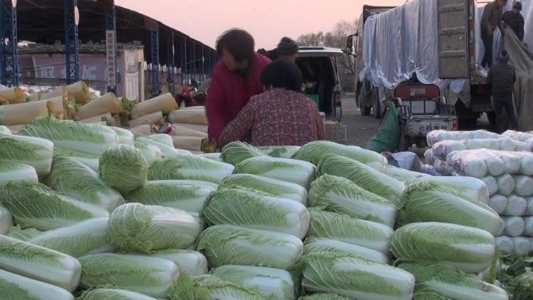 57秒丨每天30万斤废弃白菜叶,在这里它们变成了宝