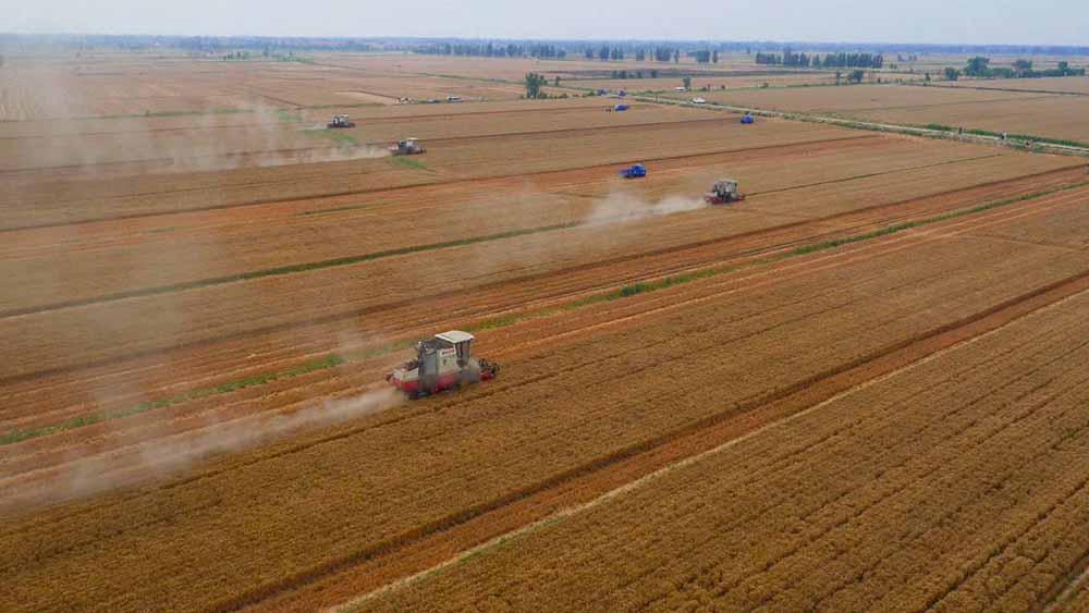 新时代 新气象 新作为|德州:为传统农业插上科技翅膀