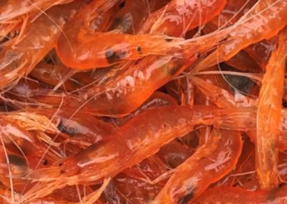 """中科院海洋所""""脊尾白虾新品种培育""""项目取得重要进展"""